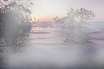Red Mangroves at sunset, Everglades National Park