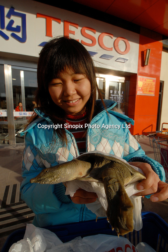 A turtle that was bought by a customer Ms Ying Bing, 24, the new branch of Tesco that recently opened in Beijing, China. The turtles were for sale at a price of about 7 pounds each..27 Jan 2007