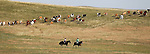 Cows are herded into a pasture on Horse Creek Road before the Cheyenne Frontier Days cattle drive Sunday morning. Michael Smith/staff
