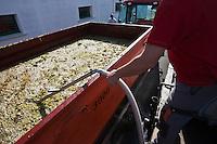 Europe/France/Poitou-Charentes/17/Charente-Maritime/Ile de Ré/Le Bois-Plage-en-Ré:Arrivée de la vendange à la  Coopérative  des Vignerons de l'Ile de Ré - UNIRE - le pesage