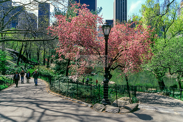 SPRING CENTRAL PARK MANHATTAN NEW YORK CITY USA