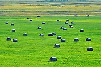 Bales<br /> Arcola<br /> Saskatchewan<br /> Canada
