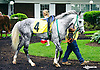 In X Hess in the paddock at Delaware Park on 5/30/16