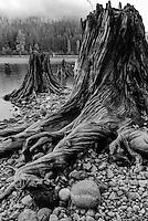 Stumps and lake