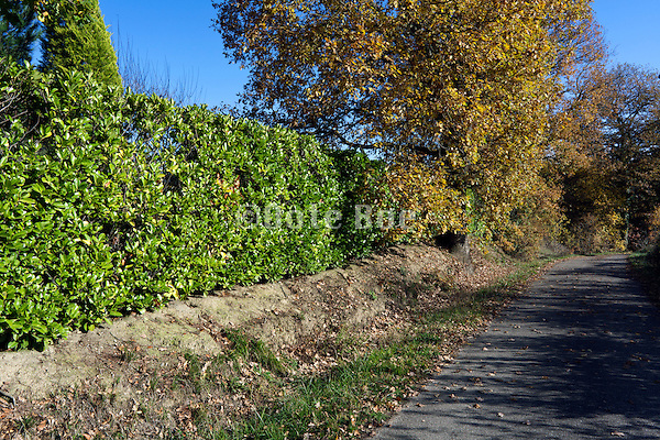 small countryside road with green hedge during autumn season