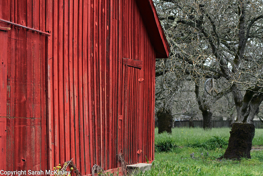 A red, wood barn near an orchard near Calistoga in Napa County in Northern California.