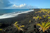 Kaimu beach, Kalapana, Hawaii, Big Island of Hawaii