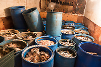"Various types of fish used as bait to catch lobsters are seen in Island Seafood's ""bait shop"" where fishermen bring lobsters to sell to the dealer in on Badger's Island in Kittery, Maine, USA, on Wed., Jan. 31, 2018. Island Seafood sells the bait fish to fishermen, who use the bait in their lobster traps."