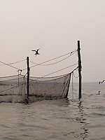 Silhouette of fishing nets with comorants flying around<br />