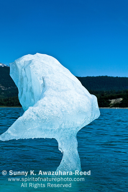 Close up of an iceberg from McBride Glacier in Muir Inlet on sunnyday, summer. The coastal mountains are in the background. Glacier Bay National Park & Preserve, SE Alaska.