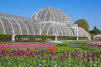 United Kingdom, England, Greater London, Kew: district in the London Borough of Richmond upon Thames - The Palm House at Royal Botanic Gardens, UNESCO World Heritage Site | Grossbritannien, England, Kew: Stadtteil Londons im Stadtbezirk London Borough of Richmond upon Thames - The Palm House im Royal Botanic Gardens, inzwischen UNESCO Weltkulturerbe