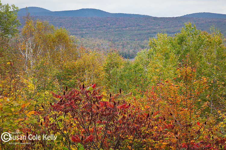 Fall foliage in Groton State Forest, Groton, VT, USA