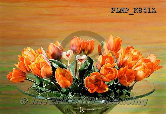 Marek, FLOWERS, BLUMEN, FLORES, photos+++++,PLMPK841A,#f#