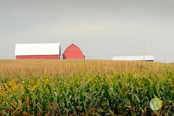 Corn field and barns..