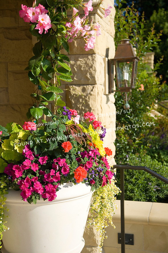 colorful pink hibiscus and other sun-loving annuals fill out this ceramic garden container against a stone wall
