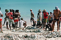 The local fishermen on Beau Vallon Bay beach pool their catches into an informal fish market.