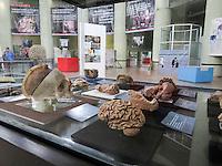 """Querétaro, Qro. 9 de diciembre 2015. Este mediodía, en el Museo de Ciencia y Tecnología """"Péndulo de Foucault"""", ubicado en el Gómez Morín, se inauguró la exposición """"El cerebro y las enfermedades neurodegenerativas"""". Foto: Alejandra L. Beltrán / Obture Press Agency."""