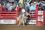 Colton Adams on 1314 during second round of the Fort Worth Stockyards Pro Rodeo event in Fort Worth, TX - 8.3.2019 Photo by Christopher Thompson