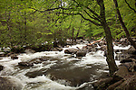 Spring stream in the Great Smoky Mountains National Park, TN, USA