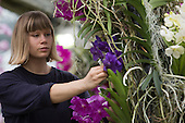 "London, UK. 5 February 2015. Kew Gardens horticulturalist Marie Karsjo prepares floral display with orchids. ""Alluring Orchids"" is the first festival on the Royal Botanic Gardens' 2015 calendar which showcases thousands of exotic and rare flowers in the Princess of Wales Conservatory from 7 February to 8 March 2015."