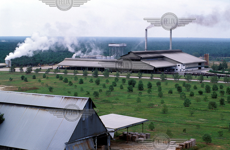 Palm oil processing plant in the centre of a huge plantation.