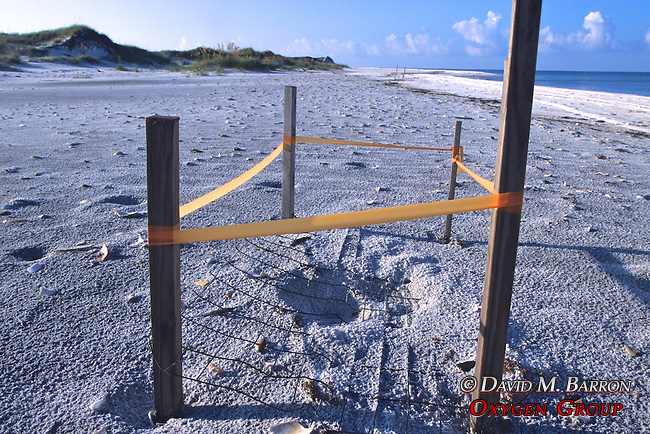 Turtle Nest Site