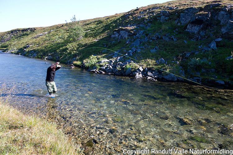 Mann kjører smålaks i liten elv. ---- Man fighting small salmon.