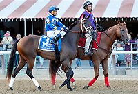 Virginia Eloise in the post parade as Sippican Harbor (no. 6) wins the Spinaway Stakes (Grade 1), Sep. 1, 2018 at the Saratoga Race Course, Saratoga Springs, NY.  Ridden by  Joel Rosario, and trained by Gary Contessa, Sippican Harbor finished 2 lengths in front of Restless Rider (No. 11).  (Bruce Dudek/Eclipse Sportswire)