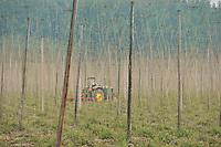Tilling between rows of hops in Marion County Oregon