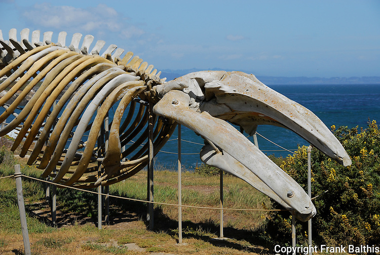 Gray whale skeleton at Seymour Discovery Center, Long Marine Lab, UCSC