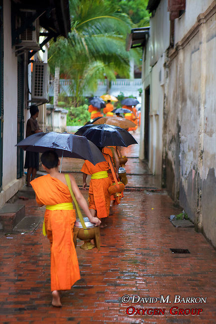 Monks Walking Back To Monastery After Receiving Food