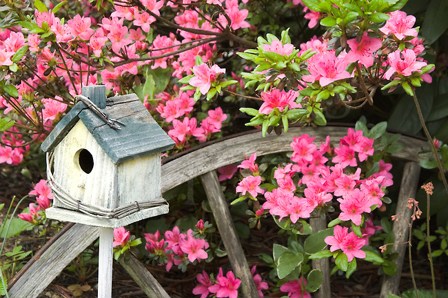 "Birdhouse and pink azaleas with weathered wagon wheel for rustic ""shabby chic"" garden decortaion."
