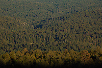 Vast ponderosa pine forest on Coconino Plateau, view of Kelly Canyon area of Coconino National Forest, south of Flagstaff, Arizona, AGPix_1908