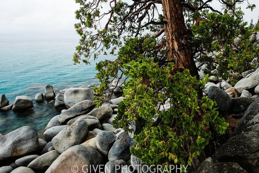 Incense Cedar Lake Tahoe
