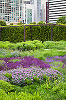 Lurie Garden reconstructed prairie meadow garden at Millenium Park, downtown Chicago; plant design by Piet Oudolf
