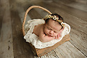 Arianna M Newborn Baby Bee Session