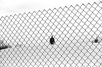 A human figure behind a fence in winter