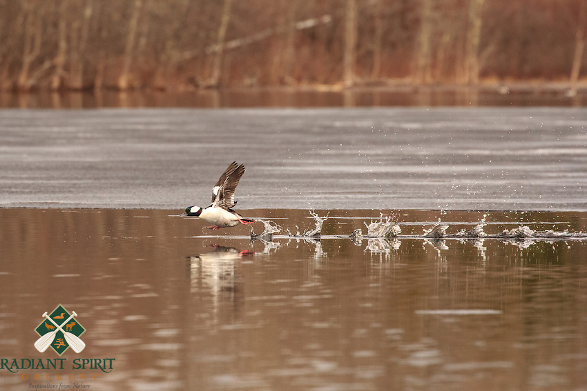 &quot;Spring on the Wing&quot;<br />