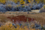 Deer in marsh in fall, Seedskadee National Wildlife Refuge, Wyoming