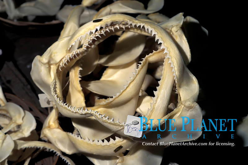 Shark jaws for sale in a curio shop
