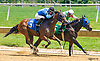 Poppy's Salsa #5 and King of Night #3 both winning in a Dead Heat at Delaware Park on 6/13/17