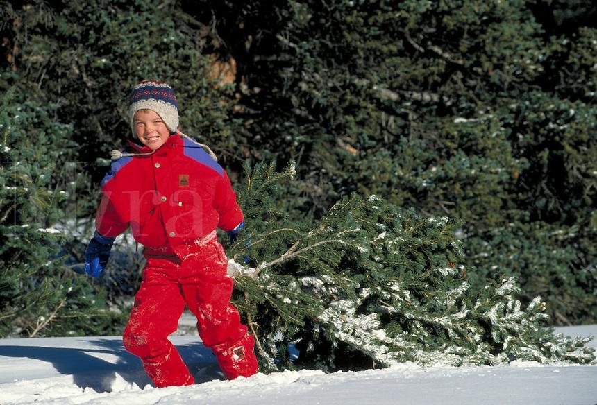 Boys with freshly cut Christmas tree.