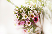 Bucket of small white and pink flowers on white background