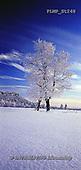 Marek, CHRISTMAS LANDSCAPES, WEIHNACHTEN WINTERLANDSCHAFTEN, NAVIDAD PAISAJES DE INVIERNO, photos+++++,PLMPST248,#xl#