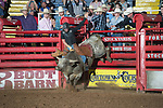 Charlie Conway on 608 during second round of the Fort Worth Stockyards Pro Rodeo event in Fort Worth, TX - 8.3.2019 Photo by Christopher Thompson