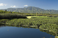 Marsh with Mount Ka'ala in background, North Shore of Oahu