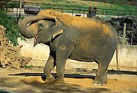 Elepant enjoying dustbath