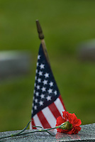 A veterans  grave marker with red carnation placed on it on Memorial Day.