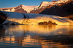 Close up of Portage Glacier with icebergs at sunrise. Byron Peak and glacier reflects on lake. Fireweed flowers in the foreground. Chugach National Forest, Kenai Peninsula, Southcentral Alaska, Summer.