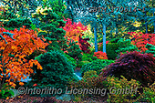 Tom Mackie, LANDSCAPES, LANDSCHAFTEN, PAISAJES, photos,+America, American, Americana, Kubota Garden, North America, Pacific Northwest, Seattle, Tom Mackie, USA, Washington, autumn,+autumnal, colorful, colourful, fall, horizontal, horizontals, inspiration, inspirational, inspire, japanese garden, japanese+maple, landscape, landscapes, leaf, leaves, natural, nature, no people, red, scenery, scenic, season, tree, trees,America, Am+erican, Americana, Kubota Garden, North America, Pacific Northwest, Seattle, Tom Mackie, USA, Washington, autumn, autumnal, c+,GBTM170614-1,#l#, EVERYDAY